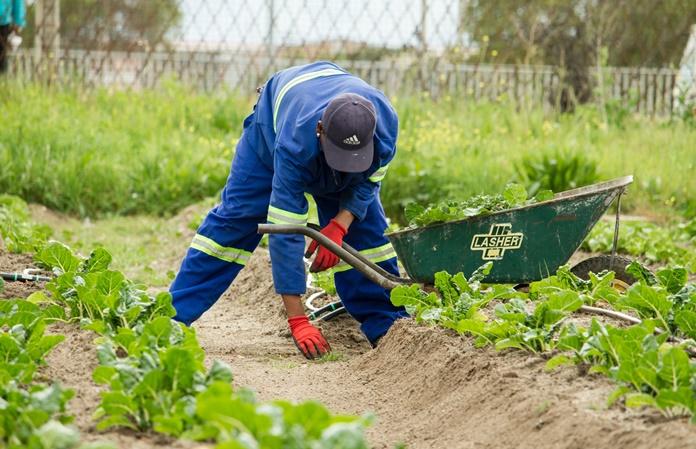Būkite atsargūs: darbuodamiesi soduose ir sodybose sugebame susižaloti net elementariausiais įrankiais