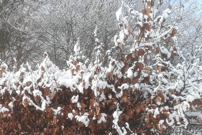 Pavasarį vėl stabdys besiskverbiantis oras iš šiaurės